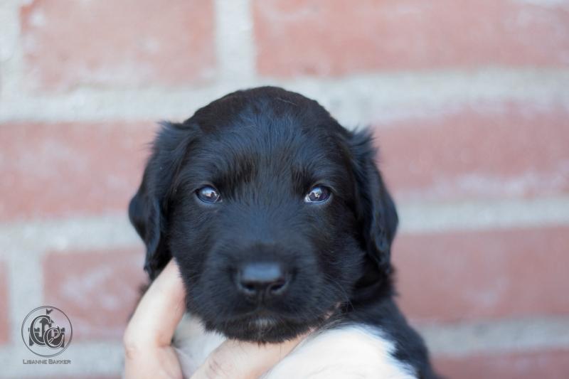Pups-3-weken-70