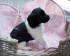 Pups-3-weken-2