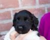 Pups-3-weken-24