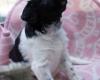 Pups-3-weken-4