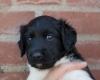 Pups-3-weken-57