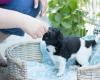 Pups-3-weken-65