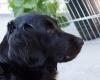 Pups-3-weken-71