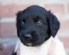 Pups-3-weken-9