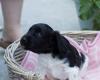 Pups-3-weken-49