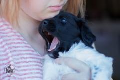 Pups-3-weken-1