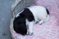 Pups-3-weken-14