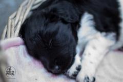 Pups-3-weken-15