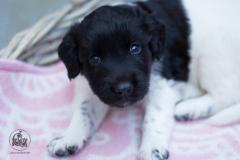 Pups-3-weken-16