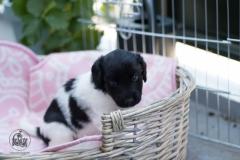 Pups-3-weken-17