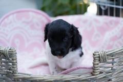 Pups-3-weken-18