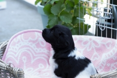 Pups-3-weken-20