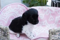 Pups-3-weken-26