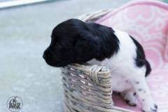 Pups-3-weken-27