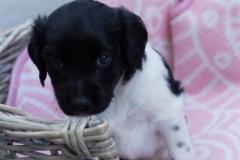 Pups-3-weken-28