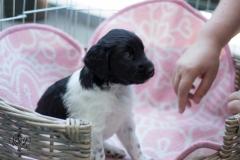 Pups-3-weken-3