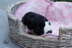 Pups-3-weken-32
