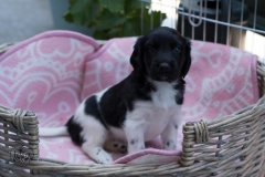 Pups-3-weken-34