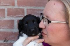 Pups-3-weken-41