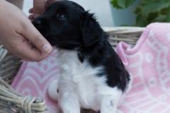 Pups-3-weken-48