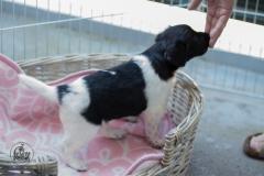Pups-3-weken-5