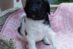 Pups-3-weken-51