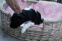 Pups-3-weken-53
