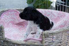 Pups-3-weken-54