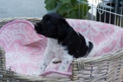 Pups-3-weken-55
