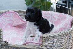 Pups-3-weken-56
