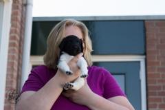 Pups-3-weken-59