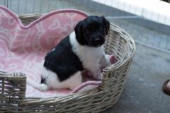 Pups-3-weken-6