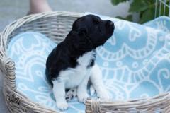 Pups-3-weken-60