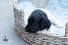 Pups-3-weken-61