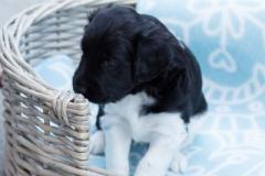 Pups-3-weken-62