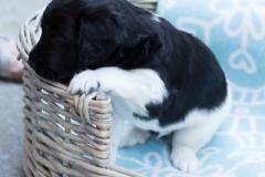 Pups-3-weken-64