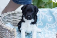 Pups-3-weken-68