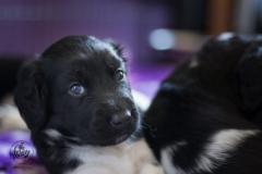 Pups-3-weken-78