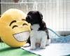 Pups-5-weken-40