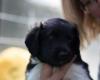 Pups-5-weken-42
