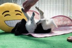 Pups-5-weken-2