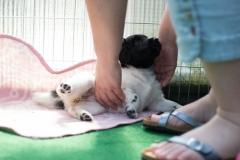 Pups-5-weken-20