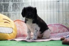 Pups-5-weken-25