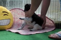 Pups-5-weken-3