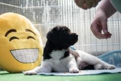 Pups-5-weken-38