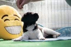 Pups-5-weken-39
