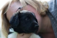 Pups-5-weken-45