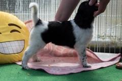 Pups-5-weken-5
