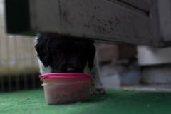 Pups-5-weken-6