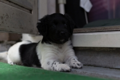 Pups-5-weken-7